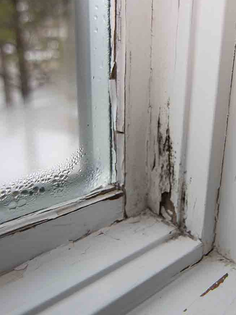 Home Air Quality Testing - Window Condensation